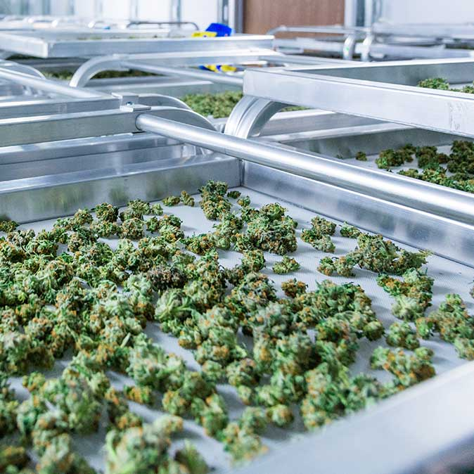 Workplaces-and-Zones-in-the-Medicinal-Cannabis-Sector